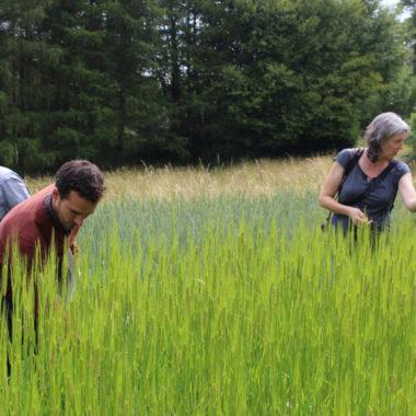 Suche nach Ackerwildkräutern auf den Feldern des Hessenparks