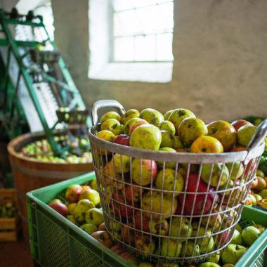 Korb mit Äpfeln in der Kelterei