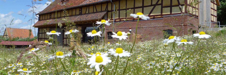 Das Ausstellungsgebäude Stallscheune aus Asterode im Frühling