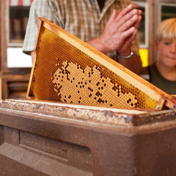 Nahaufnahme von Bienewaben. Im Hintergrund Kinder