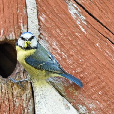Vogelstimmenwanderung am 28. März