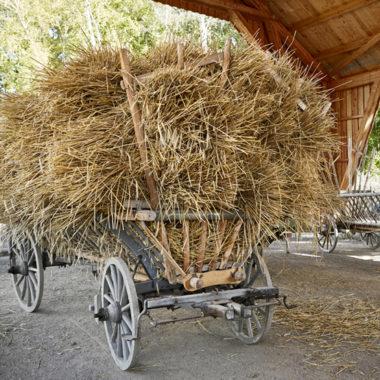 Hochbeladener Leiterwagen mit Korn