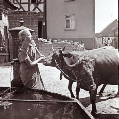 Ein Mädchen tränkt Kühe am Brunnen.