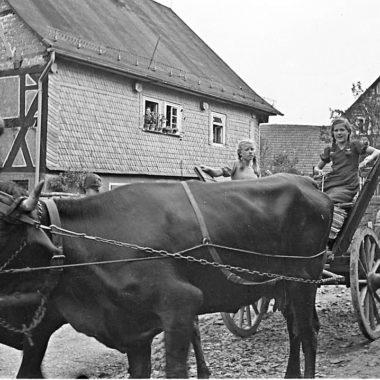 Zwei Mädchen auf einem Wagen mit vorgespannten Kühen.