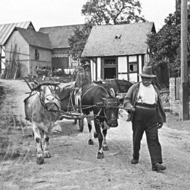 Kuhgespann mit Stirnjochen in einem Dorf, geführt von einem Mann.