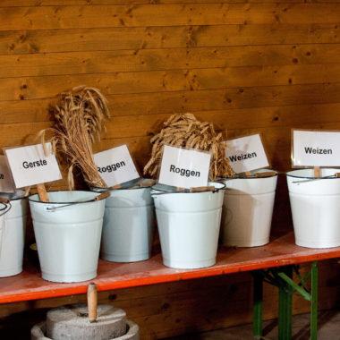 Verschiedene Getreidesorten in Eimern