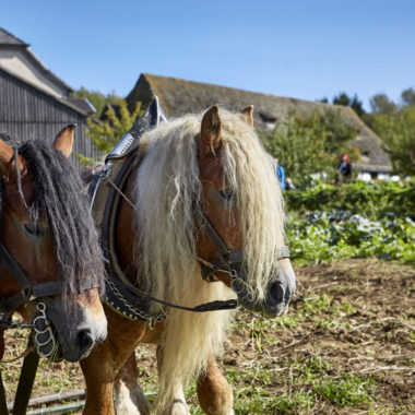 Pferde auf dem Feld
