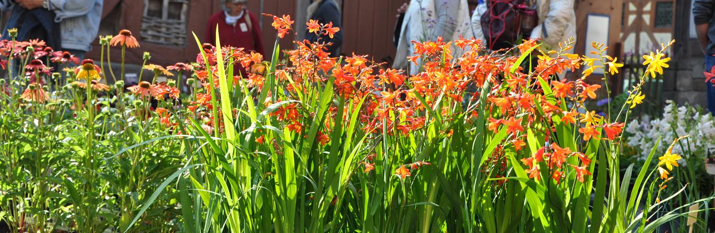 Bunte Blumen auf dem Pflanzenmarkt