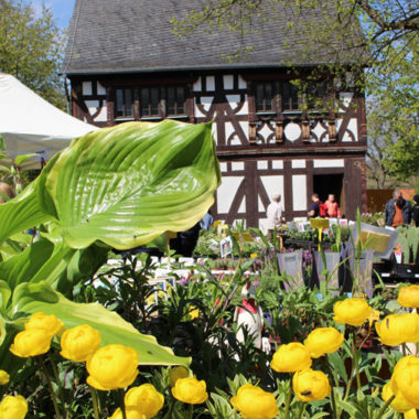Gelbe Frühlingsblumen auf dem Pflanzenmarkt