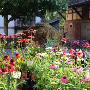 Bunte Herbstblumen auf dem Pflanzenmarkt
