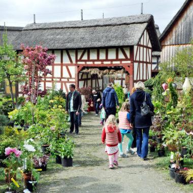 Rundgang über den Pflanzenmarkt am 4. und 5. Mai