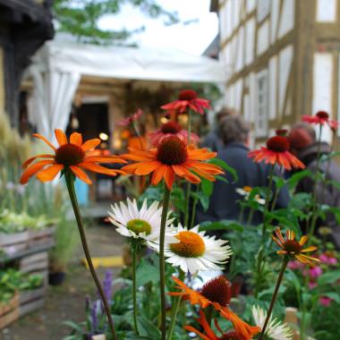Der Pflanzenmarkt im Herbst