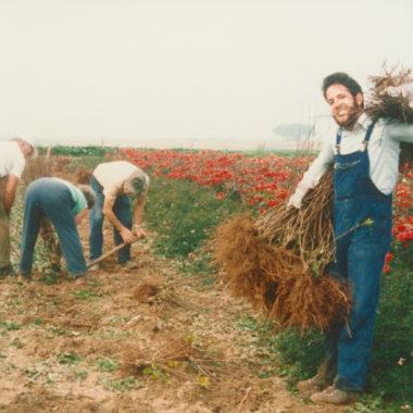 Vorführung Rosenanbau wie vor 150 Jahren am 6. und 7. Oktober