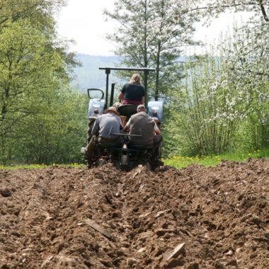 Auf einem Traktor sitzen drei Mitarbeiter. Zwei davon nur knapp über dem Acker um Kartoffeln zu setzen