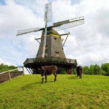 Betreute Ausstellung in der Windmühle am 23. August